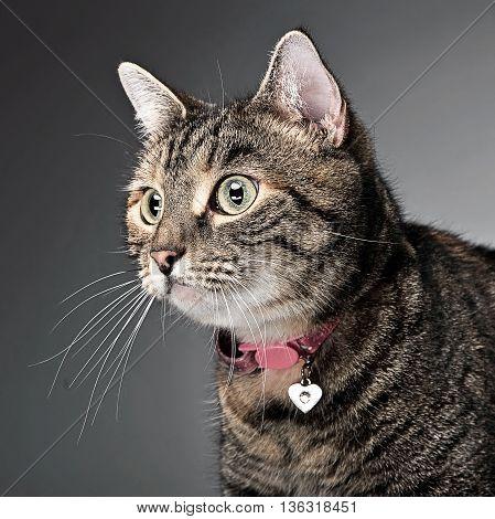 Sweet Cat Portrait In A Photo Studio