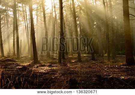 Nature background of peaceful forest with copy space on ground with sun rays shining through trees
