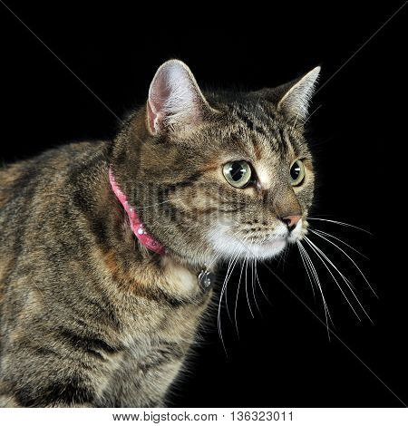 Nice Domestic Cat In A Dark Studio