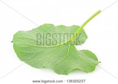 Leaf of burdock