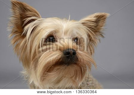 funny mixed breed dog sitting in the white studio