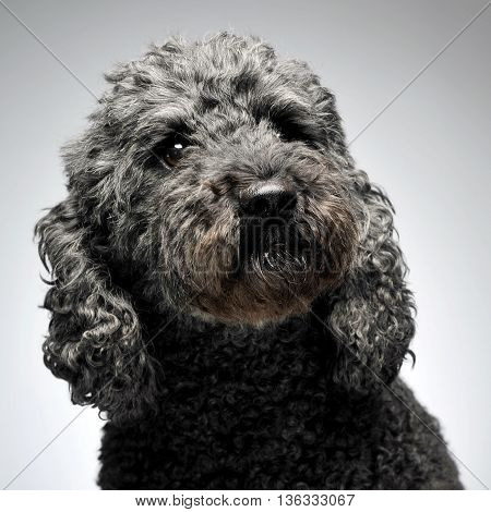 Puppy Pumi Feeling Good In A White Photo Studio