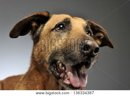 Mixed Breed Dog In A Photo Studio