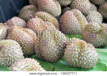 Group of durian in the market. durian, fruit, fresh,