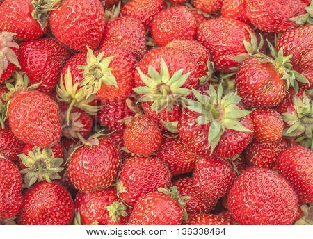 berries dessert collection for background food production