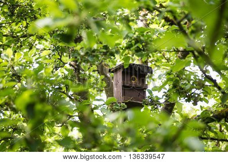 Little Birdhouse at Spring in green garden