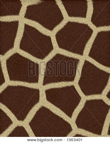 Giraffe Large Spots Short Fur