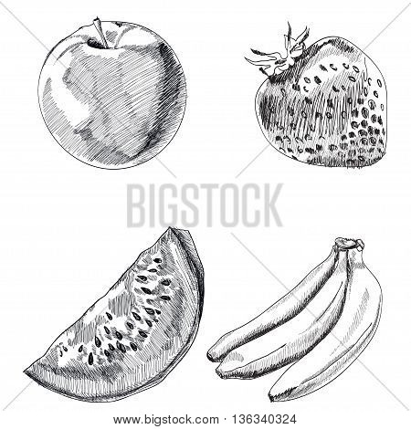 Collection of highly detailed hand drawn fruits set. Vector illustration