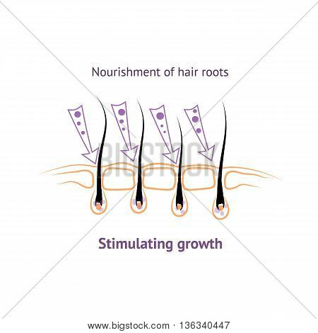 Food roots human hair stimulating growth in hair loss, hair bulb the structure