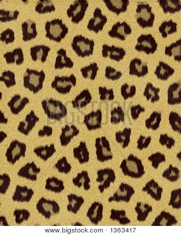 Leopard Medium Spots Short Fur