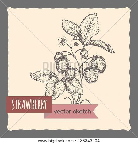 Fresh strawberry in garden hand drawn vector sketch. Great for cooking, gardening, farming or agricultural design.