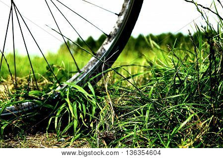 Wheel of a bike in the green grass