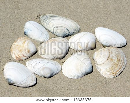 The seashells on the South Bethany Beach in Delaware April 2016 Usa