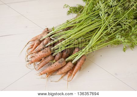 Raw Carrots picked from the Vegetable Garden
