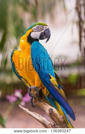 photo of bright blue and yellow macaw parrot