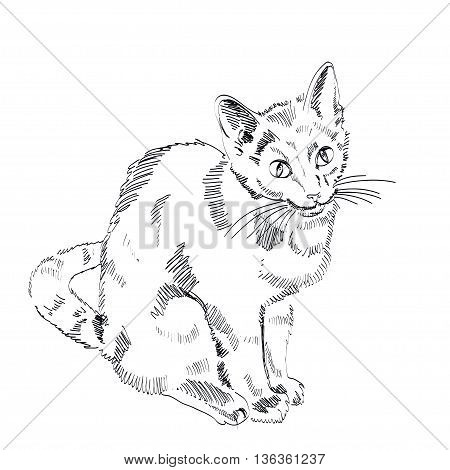 The Russian Blue Cat on a white background. Vector EPS