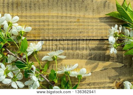 Cherry Flowers And Leaves On Wood