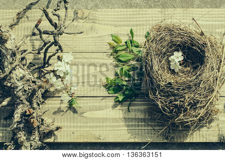 Cherry Flowers In Nest On Wood