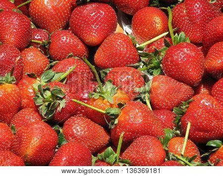 Brilliant farm fresh ripened strawberries at a farm stand.