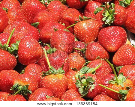 Red glistenening strawberries at a farm stand.