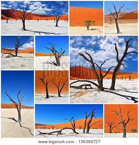 Most beautiful landscape in Namibia. Dead Camelthorn Trees against a red dunes in Deadvlei Sossusvlei. Collage. Namib-Naukluft National Park Namibia Africa.