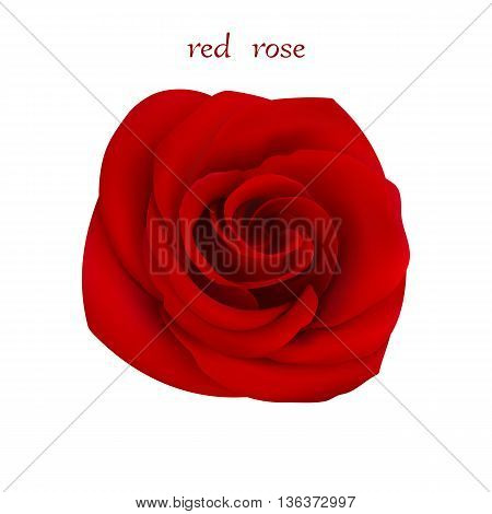 Red Rose. Isolated Flower on a White Background. Mesh Gradient was used. EPS-8.