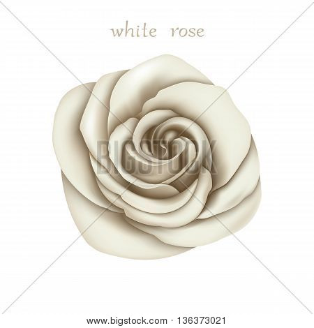 White Rose. Isolated Flower on a White Background. Mesh Gradient was used. EPS-8.