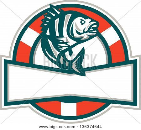 Illustration of a sheepshead (Archosargus probatocephalus) a marine fish jumping up set inside circle with lifesaver buoy in the background done in retro style.