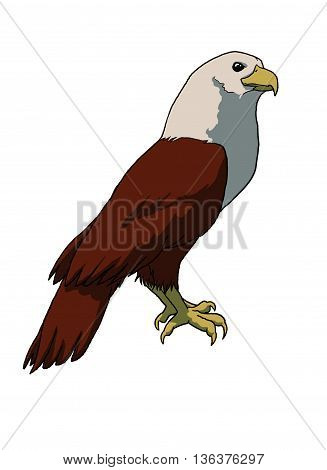 Perched bird of prey Brahminy Kite cartoon character cutout