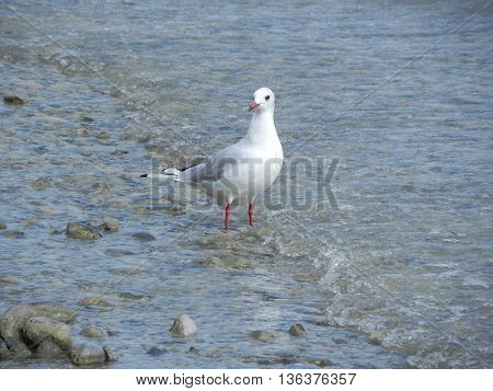 Bird on the beach with stones and waves