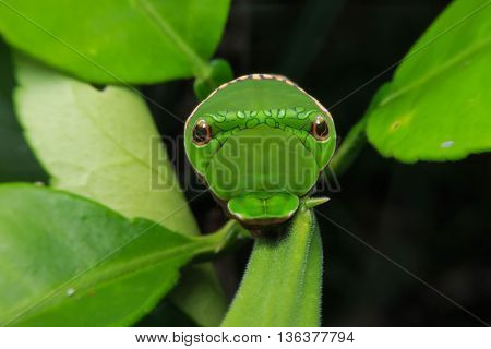 Green worm in forest at Hong Kong