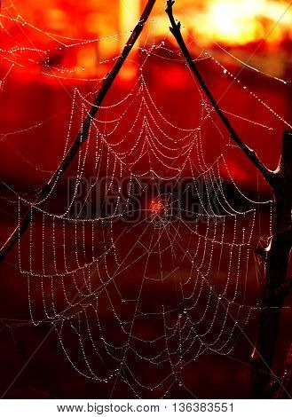 Eerie cobweb with red background for halloween