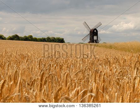 Pitstone windmill in a wheat field with a cloudy sky