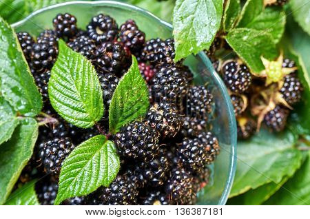 Forest blackberry in a small glass bowl