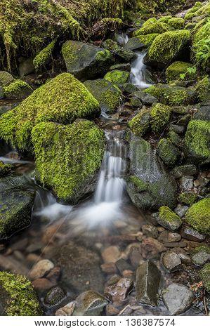 Small cascade through mossy rocks near Sol Duc Falls in Washington.