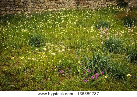The Carpet Of Flowers On Mount Filerimos, Rhodes, Greece