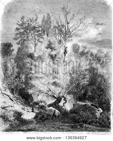 A timber near Luciennes, vintage engraved illustration. Magasin Pittoresque 1852.