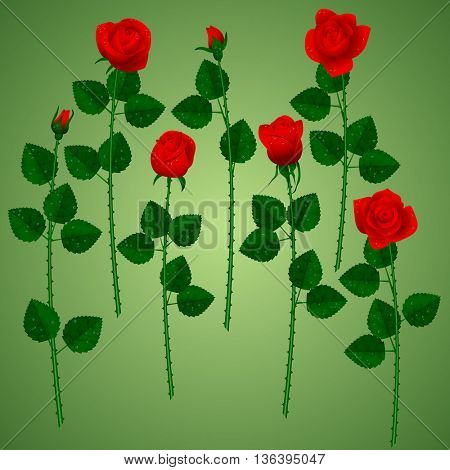 Set of red roses on green background. Vector illustration