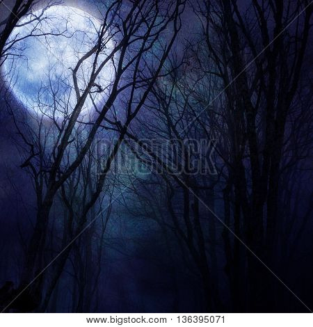 dark night forest agaist full moon in a blue color