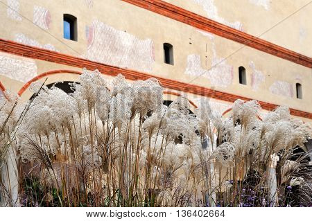 Middle Ages courtyard with reeds and old wall