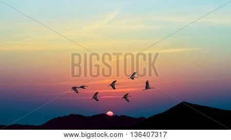 Birds at sunrise or sunset autumn concept