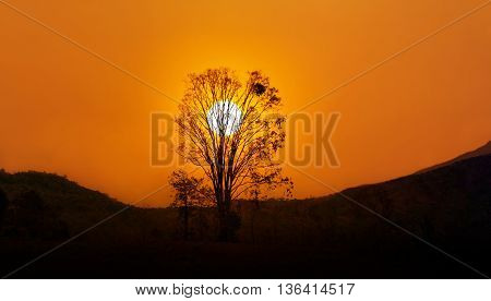 Sunset In Twilight With Tree Silhouette