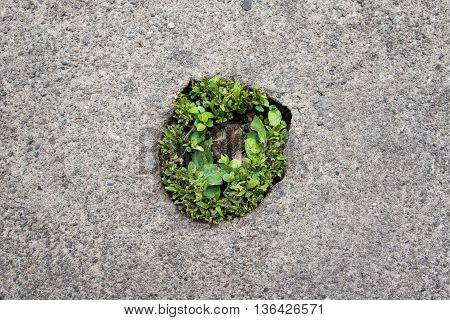 round small plant on street  in the cement