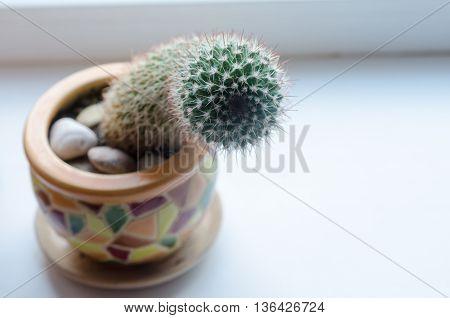 Close-up Photo Of Cactus