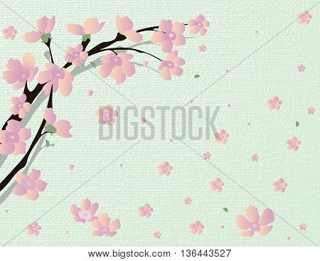 Cherry Vector blossom tree. Japanese cherry tree with flying petals on colorful background
