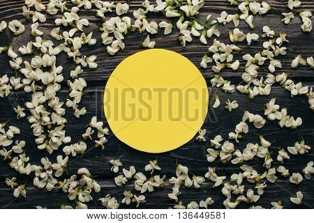 Yellow paper circle in white acacia blossoming flower petals decorative frame on dark wooden background