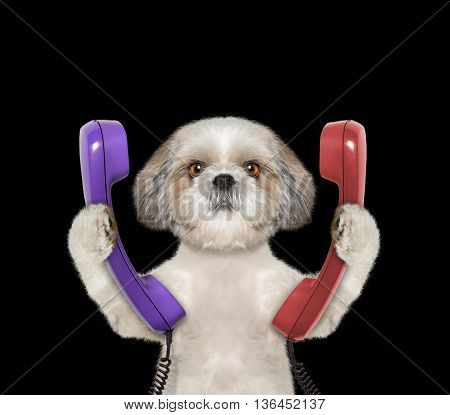 dog keeps phone and going to make a call -- isolated on black background