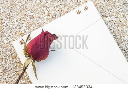 Closeup dried red rose with white note paper on stone floor texture background