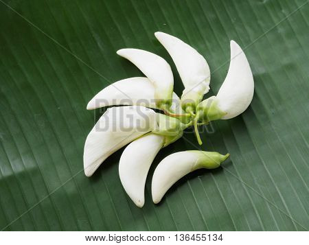 White sesban vegetable, white flower on banana leaf
