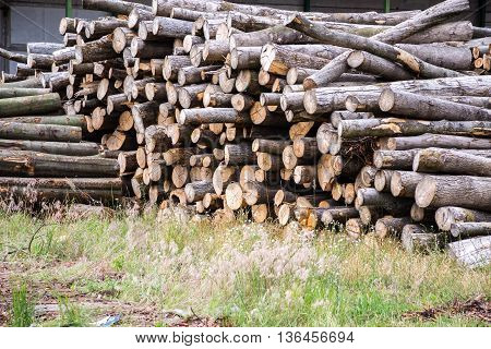 wood sawmill log crane timber trees of forest